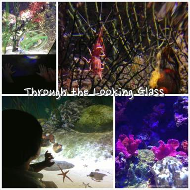SEA_Aquarium_Magnify_Glass_HomeschoolCrafts