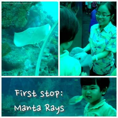 SEA_Aquarium_MantaRay_HomeschoolCrafts
