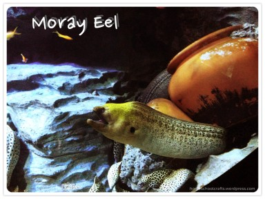 SEA_Aquarium_Moray_Eel_HomeschoolCrafts