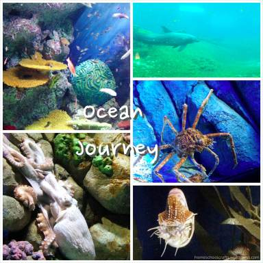 SEA_Aquarium_Ocean_Journey_HomeschoolCrafts