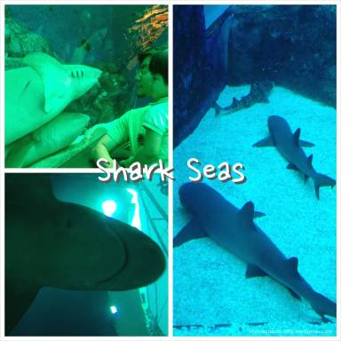 SEA_Aquarium_Shark_Sea_HomeschoolCrafts