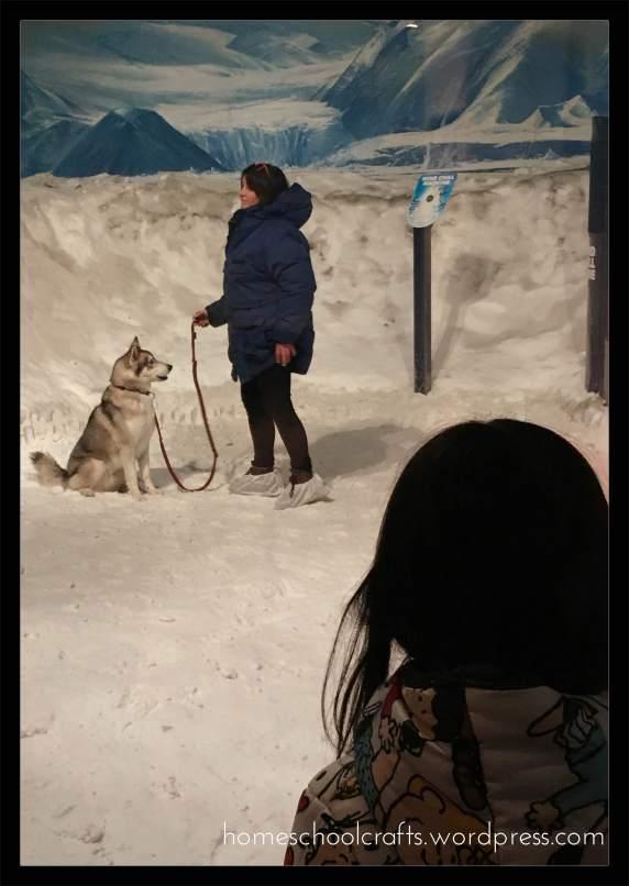 Husky-International-Antartic-Centre-Homeschool-Crafts.jpg
